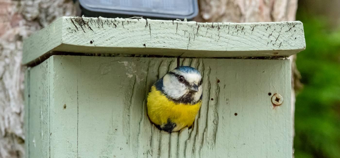do-kiedy-dokarmiac-ptaki-4.jpg