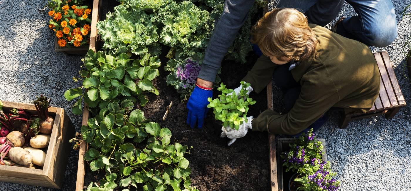 jak-przygotowac-ziemie-pod-warzywa-1.jpg