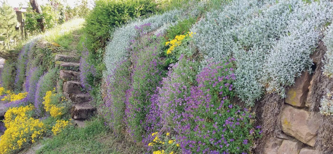 kolorowe-kwiaty-do-ogrodu-1.jpg
