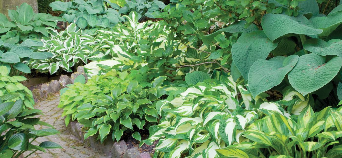 kwiaty-ogrodowe-wieloletnie-08.jpg