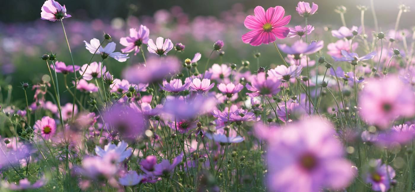 laka-kwietna-zamiast-trawnika-01.jpg