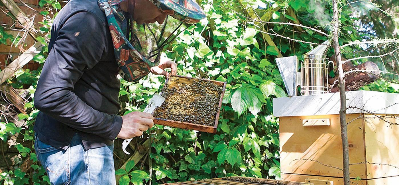 miejskie-pszczoly-1.jpg