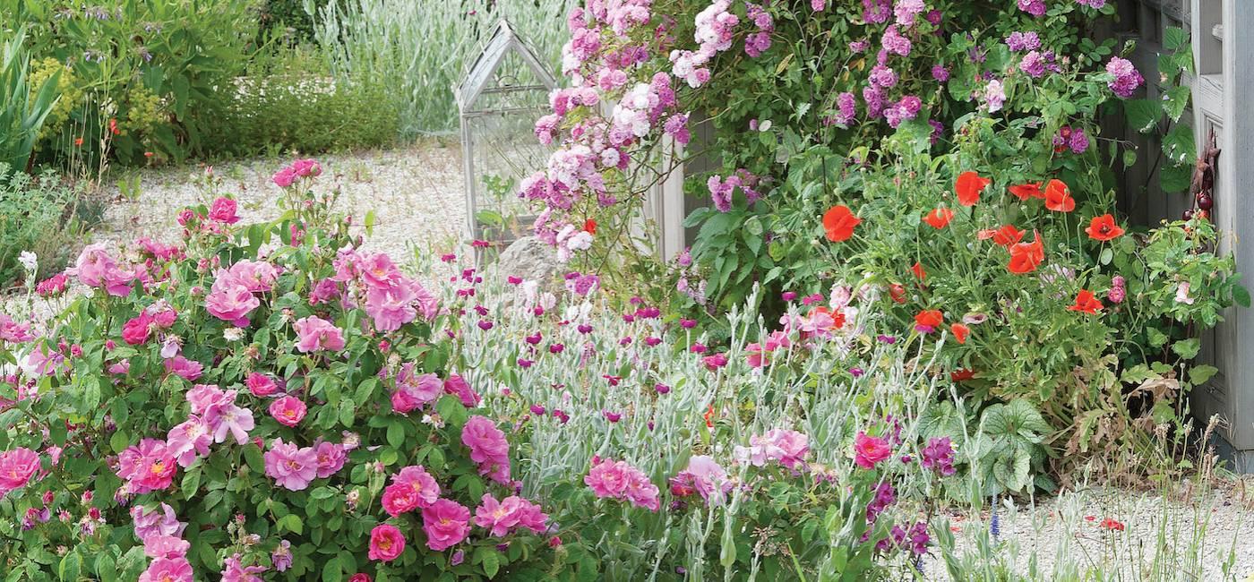 pachnace-kwiaty-do-ogrodu-01.jpg