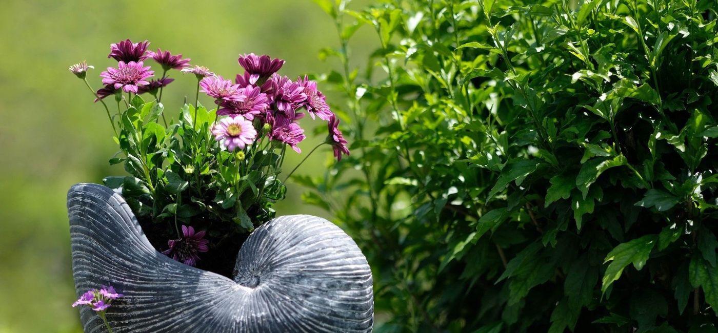 trawy-ozdobne-do-ogrodu.jpg