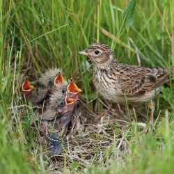 Jak ptaki budują gniazda? | Werandacountry.pl