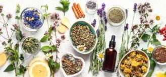 Suszone zioła – zbieranie, zastosowanie i pomysły na dekoracje