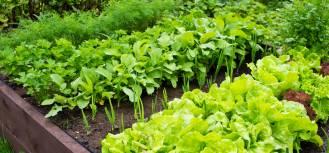jakie warzywa sadzić koło siebie