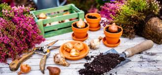 Jesień w ogrodzie: jakie kwiaty sadzić?