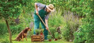 Kalendarz księżycowy ogrodnika: jakie prace ogrodowe wykonać w czerwcu?