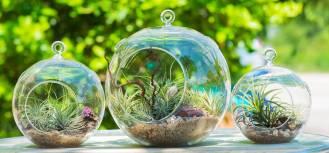 Kompozycje w szkle – roślinna egzotyka w Twoim domu