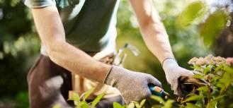 Podstawowe narzędzia ogrodowe – co warto mieć w domowym ogrodzie?