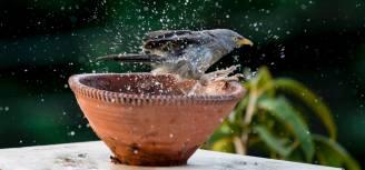 poidełko dla ptaków w ogrodzie