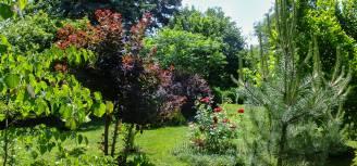 rośliny o bordowych liściach