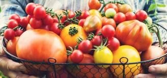 Uprawa pomidorów – dlaczego warto mieć swoje nasiona?