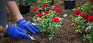 dobra ziemia do kwiatów