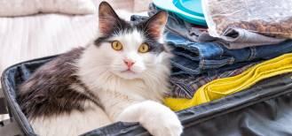 Podróż z kotem czy bez kota?