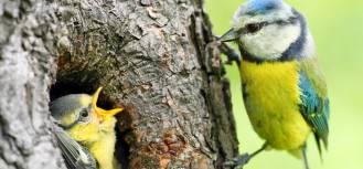 Życie po życiu – po co nam stare drzewa, pnie i konary?