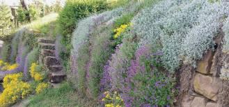kolorowe kwiaty do ogrodu