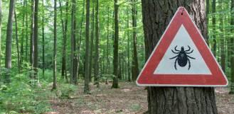 Ugryzienie kleszcza: zabezpiecz siebie i psa
