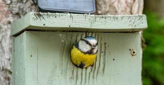 do kiedy dokarmiać ptaki