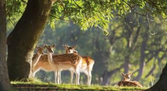 Co wiedzą zwierzęta, o czym my nie mamy o tym pojęcia?