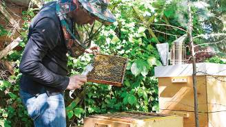 miejskie pszczoły