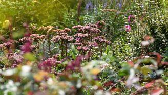 jesienne kwiaty do ogrodu