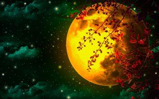 Kalendarz księżycowy ogrodnika: jakie prace ogrodowe wykonujemy w lutym?