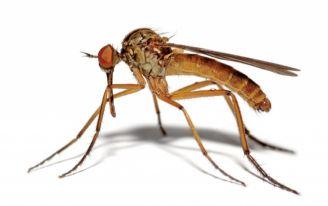 Komar w lutym? Zła nowina!