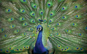 Miłosne gierki ptaków