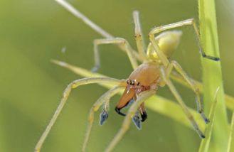 Tarantula od sąsiada