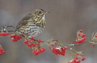 Dla kogo śpiewaja ptaki