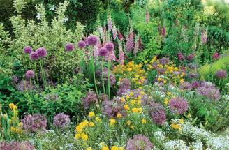 Czosnek ozdobny do ogrodu: fioletowe kule na rabatach