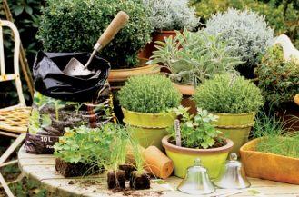 Jak zimują zioła?