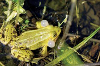 Zaproszenie dla żaby