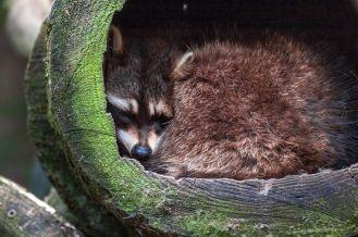 jakie zwierzęta zapadają w sen zimowy