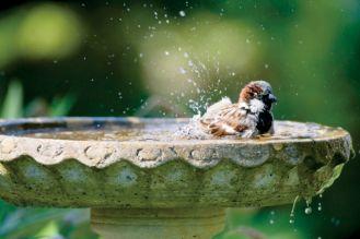 Poidła dla ptaków