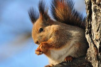 Karmnik dla ptaszka i wiewiórki