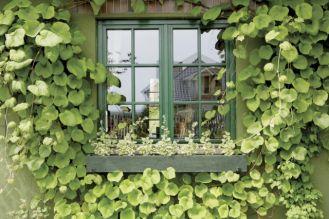 Zielone okna