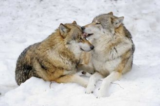 Zima do kochania