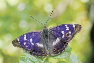 Chwila dla motyla