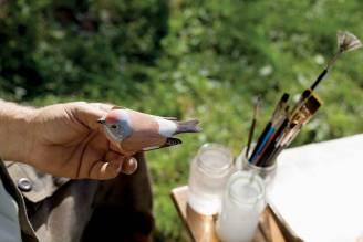 artyści biebrzański park narodowy