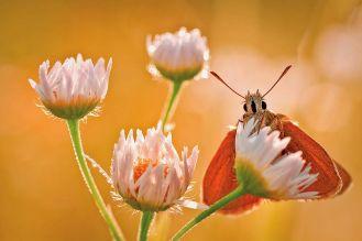 Zanim odlecą motyle - niezwykłe fotografie polskiej artystki