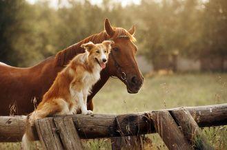 Ochrona praw zwierząt w Polsce – rozmowa z Karoliną Kuszlewicz