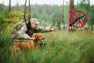 Dość polowań na dziki i zwierzynę: do końca marca można wyłączyć swoją działkę z obwodu łowieckiego