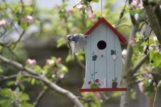 śpiew ptaków wiosną