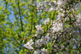Przysłowia na kwiecień