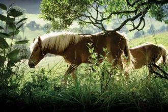 Świat według konia