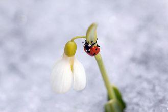 Co owady robią zimą?