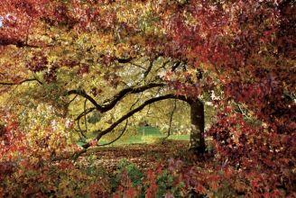 Jesiennie wystrojone